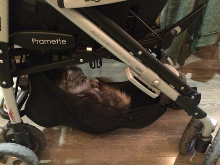 my-new-friend-leon-at-la-ronronnerie-cats-bar