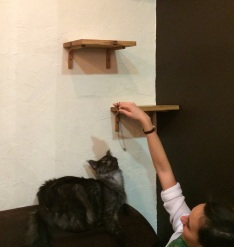 playing-cat-at-la-ronronnerie