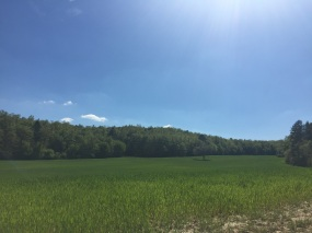 Castelvecchio reserve